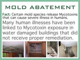 mold2-280x210